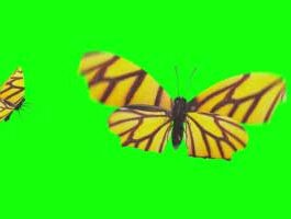 3D Butterfly Animation