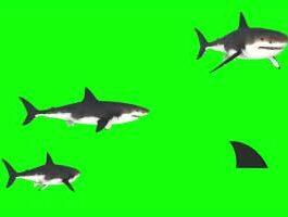 3D Shark Green Screen